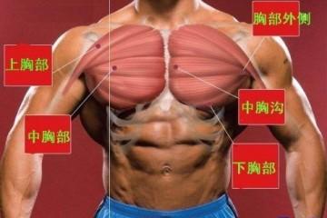 健身当中的胸肌健身图解(胸肌介绍)
