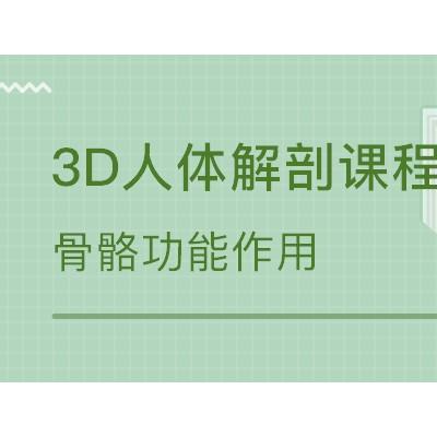 3D人体解剖私人健身教练培训课程